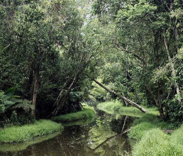 Kawasan Penyangga Hutan Lindung Sungai Wain Terbakar