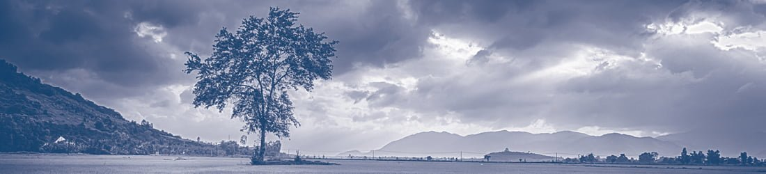 A lone tree in a field that overlooks mountains