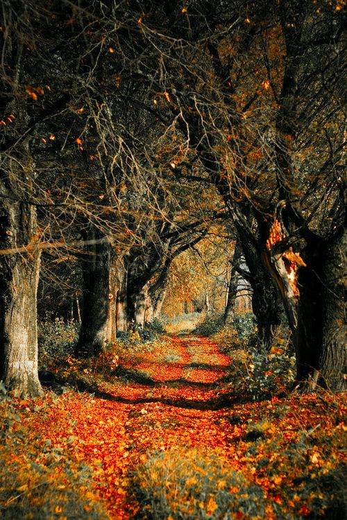 Autumn Rust, Latvia