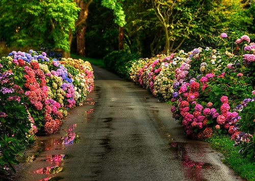 Flowered Lane, Yorkshire, England