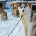 Avventure nell'Artico con la camera Sony FX9