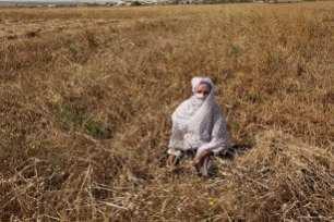 20160518_Israel-damages-gaza-crops-agriculture-1