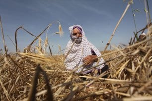 20160518_Israel-damages-gaza-crops-agriculture-2