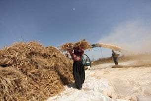20160518_Israel-damages-gaza-crops-agriculture-3