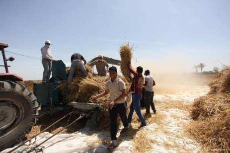 20160518_Israel-damages-gaza-crops-agriculture-4