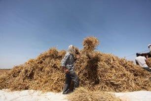 20160518_Israel-damages-gaza-crops-agriculture-8