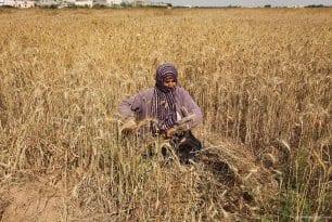 20160518_Israel-damages-gaza-crops-agriculture-9