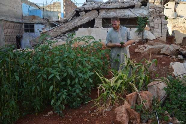 ALEPO, SIRIA: Abdullah al-Kitmavi trabaja en su jardín entre las ruinas del barrio de Qadi Askar, en Alepo.