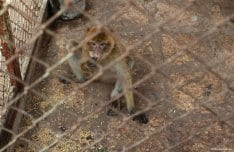 Gaza-Zoo-animals-02