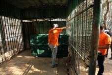 Gaza-Zoo-animals-09