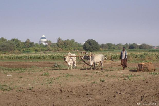 Un agricultor arando con vacas, al fondo un edificio de diseño modernos. [Nubia Archivo de Imágenes / flickr]
