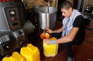 BEIT JALA,PALESTINA: Aceite de oliva recién prensado de Palestina.