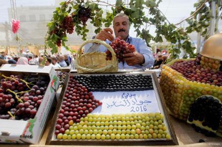 HEBRÓN, CISJORDANIA: En el festival de las uvas de Halhoul, las frutas reivindican su identidad