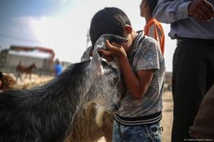 El Eid-al-Adha está cerca y Palestina se prepara para su celebración. Los corderos invaden Gaza y los niños y niñas se divierten con ellos.25 de agosto de 2017, Gaza [Ali Jadallah / Agencia Anadolu]