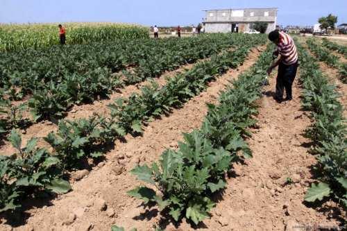 Una vez desaparecido el terrorismo, la agricultura revive en el…