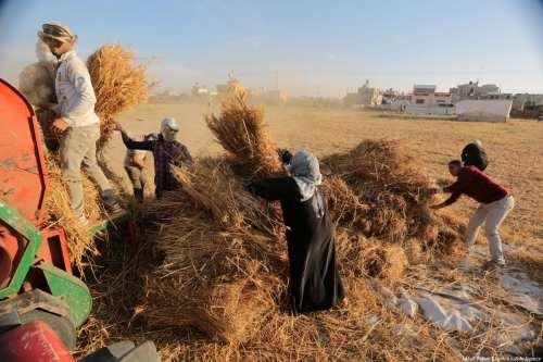 Las fuerzas de Israel confiscan cinco tractores en Cisjordania
