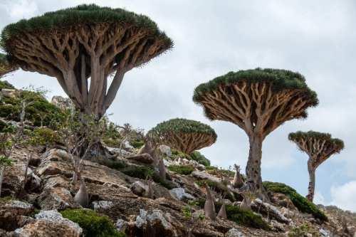 """""""Los Emiratos Árabes Unidos impusieron su plena soberanía en Socotra"""",…"""