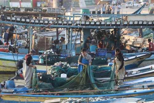 Los pescadores de Gaza capturan 73 atunes gigantes en el…