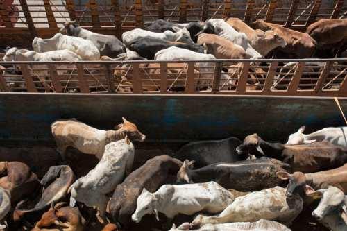 200.000 animales podrían morir en el embotellamiento del Canal de…