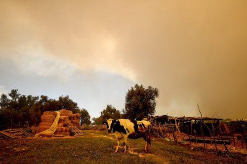 3 personas mueren en un incendio forestal en Turquía