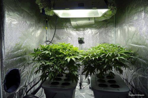 Entra en vigor el proyecto de ley para legalizar el…
