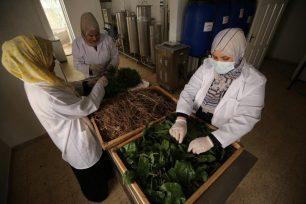 Las mujeres de Gaza han fabricado una gama de artículos de belleza naturales libres de radicales y productos químicos, 18 de agosto de 2021 [Mohammed Asad/Middle East Monitor].