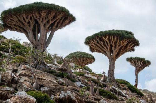 Arquipélago de Socotra no Mar Árabe [Wikipedia]