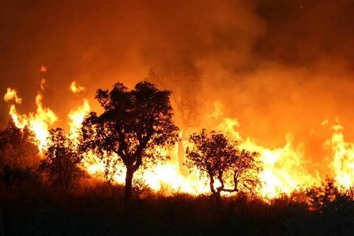 Incêndio em uma floresta na Argélia, 1º de setembro de 2017. [STR/AFP/Getty Images]