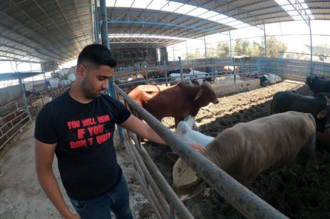 Palestinos preparam animais para abate para Eid Al-Adha em Gaza, 15 de julho de 2021 [Mohammed Asad / Monitor do Oriente Médio]