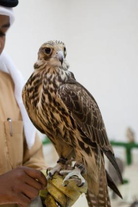 Vista de uma loja para comprar falcões com um homem com roupas tradicionais dishdasha no Souq Waqif, em 24 de dezembro de 2011, em Doha, Catar [Nadine Rupp/Getty Images]
