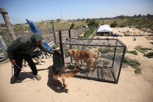 Reabilitando cães abandonados de Gaza, em 13 de outubro de 2021, em Gaza [Mohammed Asad/Monitor do Oriente Médio]Reabilitando cães abandonados de Gaza, em 13 de outubro de 2021, em Gaza [Mohammed Asad/Monitor do Oriente Médio]