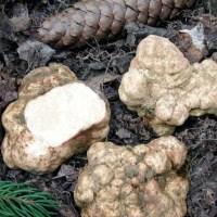 Povești din trecut: ciupercile domneşti