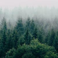 Declarația HS Timber Group referitor la implicarea în posibile modificări ale Codului Silvic
