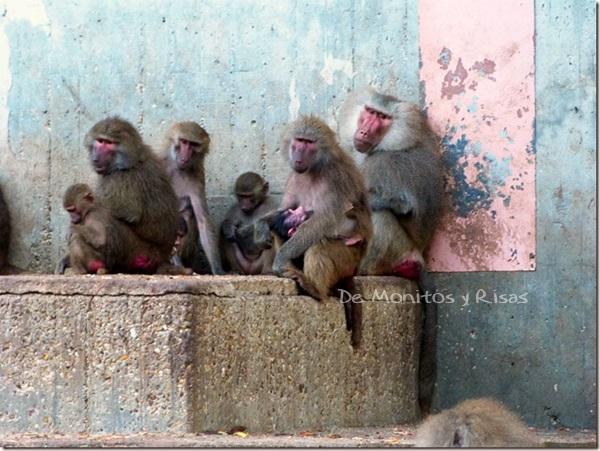 Monos de Sira