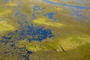 Elefanten durchstreifen das Okavango-Delta.