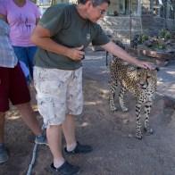 Nachher dürfen die Geparden sogar gestreichelt werden.