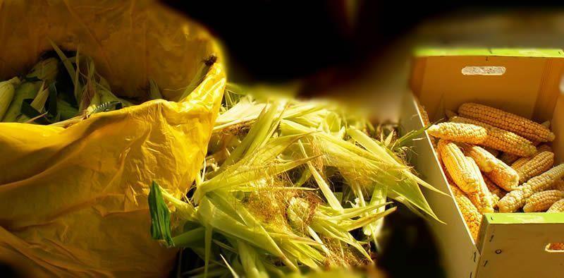 sobreabundancia de maiz