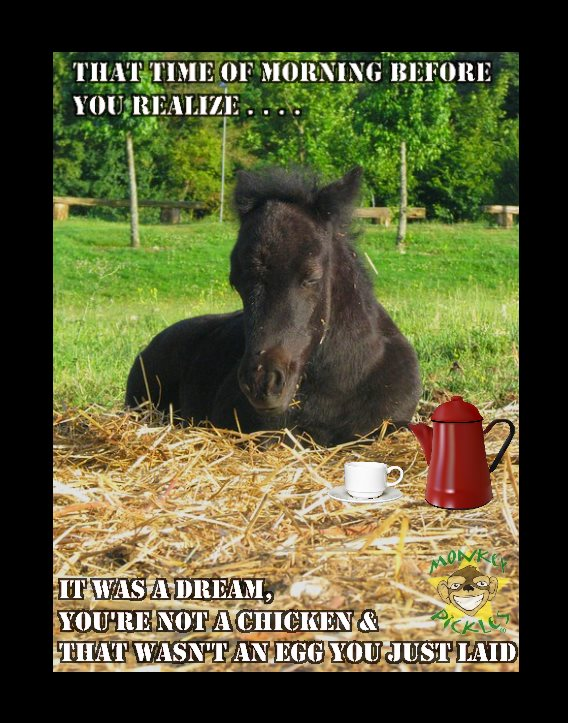 MEME morning horse