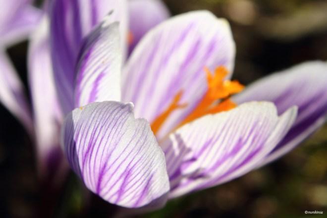 Frühling Fotografie