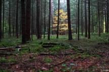 Herbst Brandenburg Fotografie
