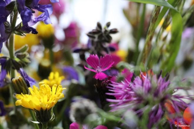 Essbare Sommerblueten sammeln