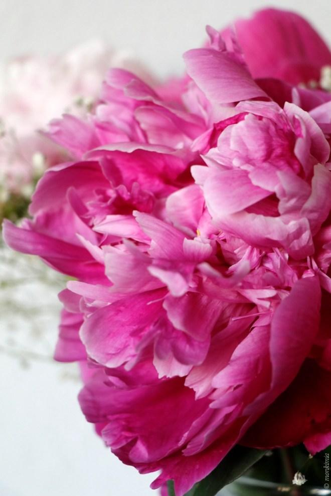 Fotoworkshop Monkimia Blumen Makroaufnahme