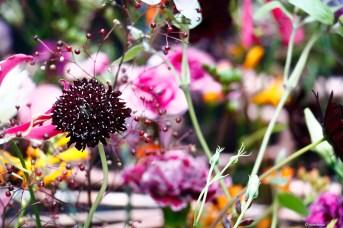 DM Floristen Berlin