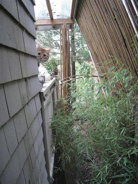 bamboo-cat1