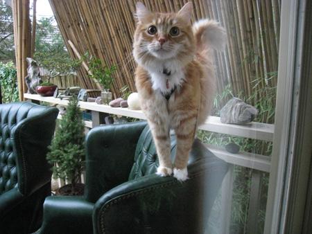 bamboo-cat2