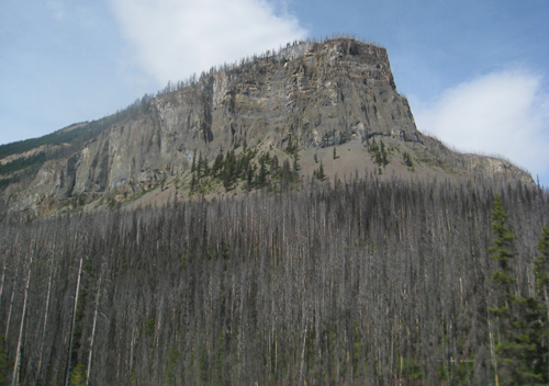 Kootenay National Park decimated by the pine beetle infestation