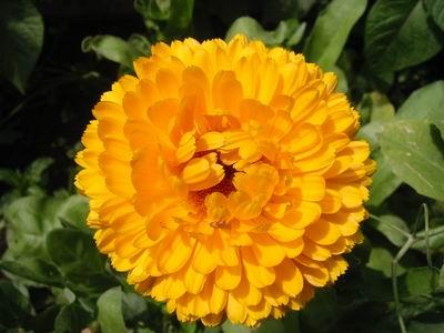 Photos de fleurs jaunes et orange