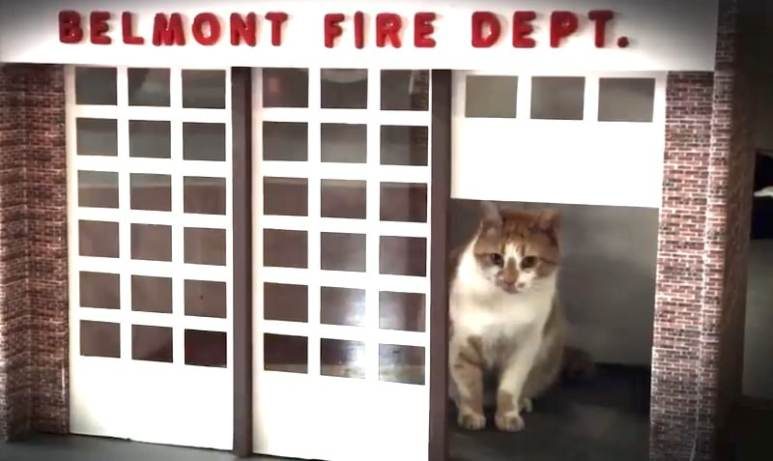 Flame the cat in mini fire station