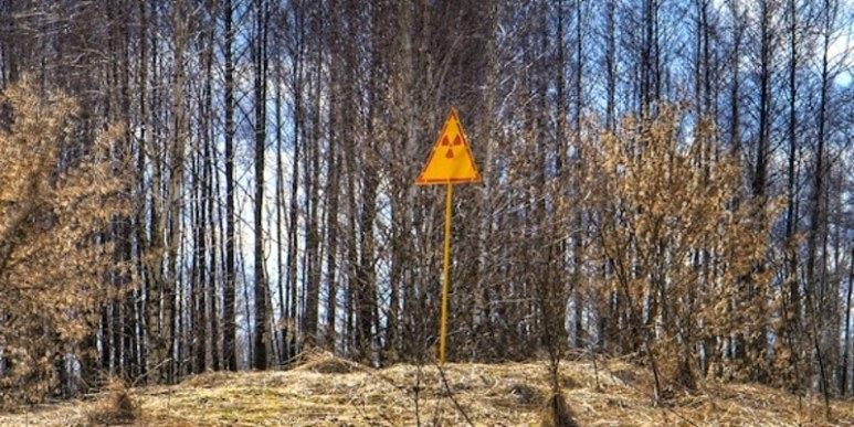 Chernobyl's red forest, where the pines died soon after the accident
