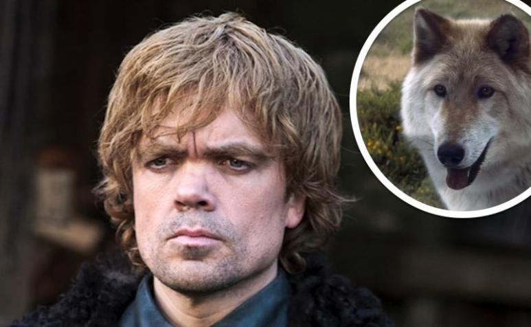 Peter Dinklage as Tyrion Lannister and a direwolf